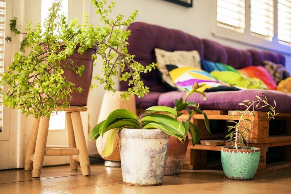 Famosos Vasinhos de plantas na decoração da sala de estar de Casa Aberta  HA13